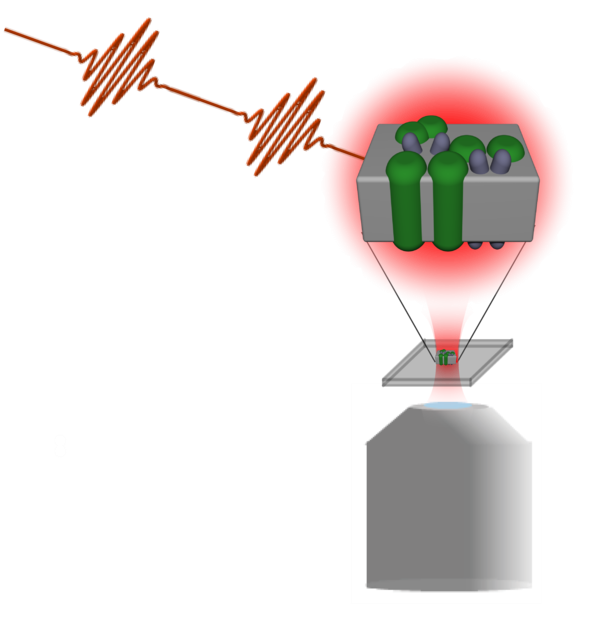 SchlauCohen Logo.png