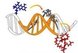 DNA-scaffolded molecular aggregates.