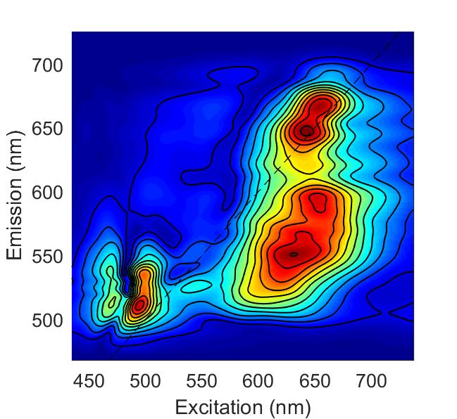 Broadband 2D electronic spectrum of LHCII, which maps out excited states and dynamics across the visible region.
