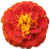 marigold footer