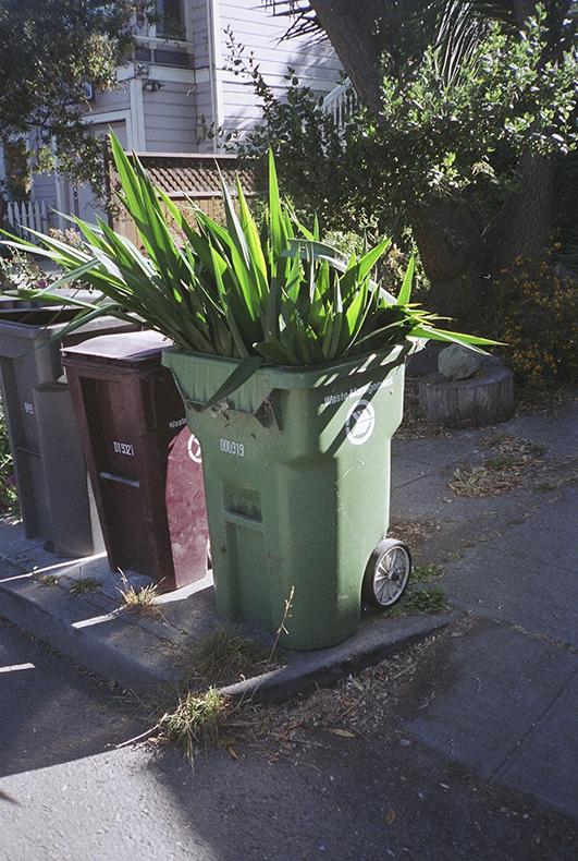 planttrash.jpg