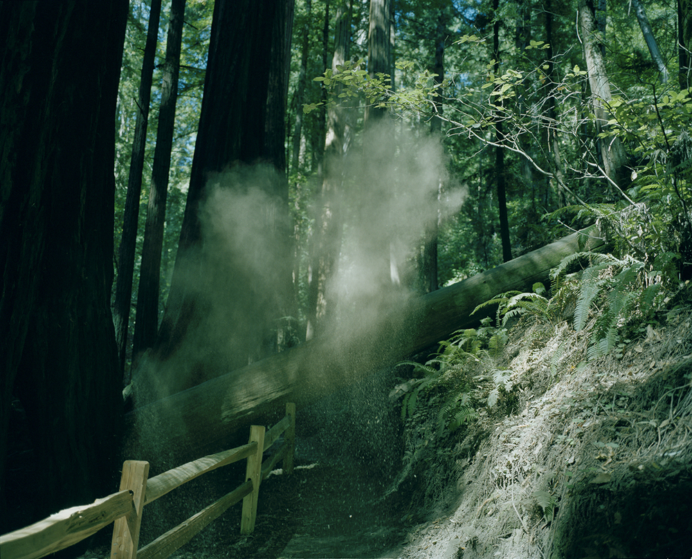 dust_in_muir_woods.jpg