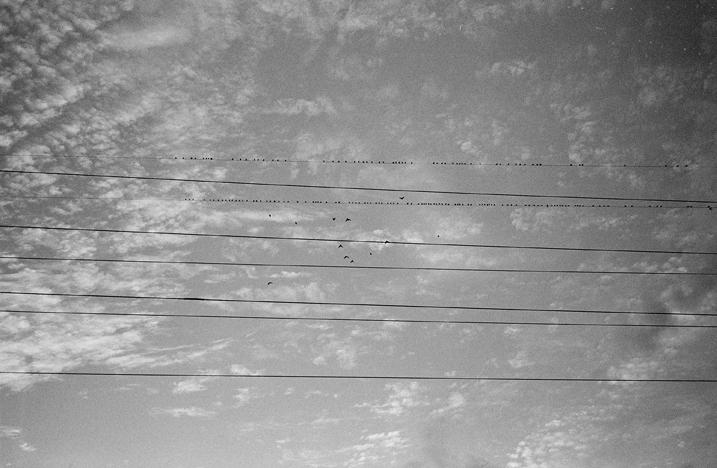 fla_birds.jpg