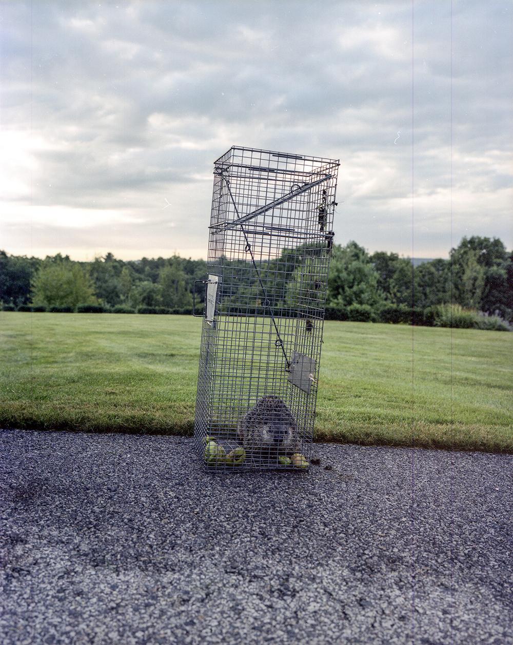 caught-rodent.jpg