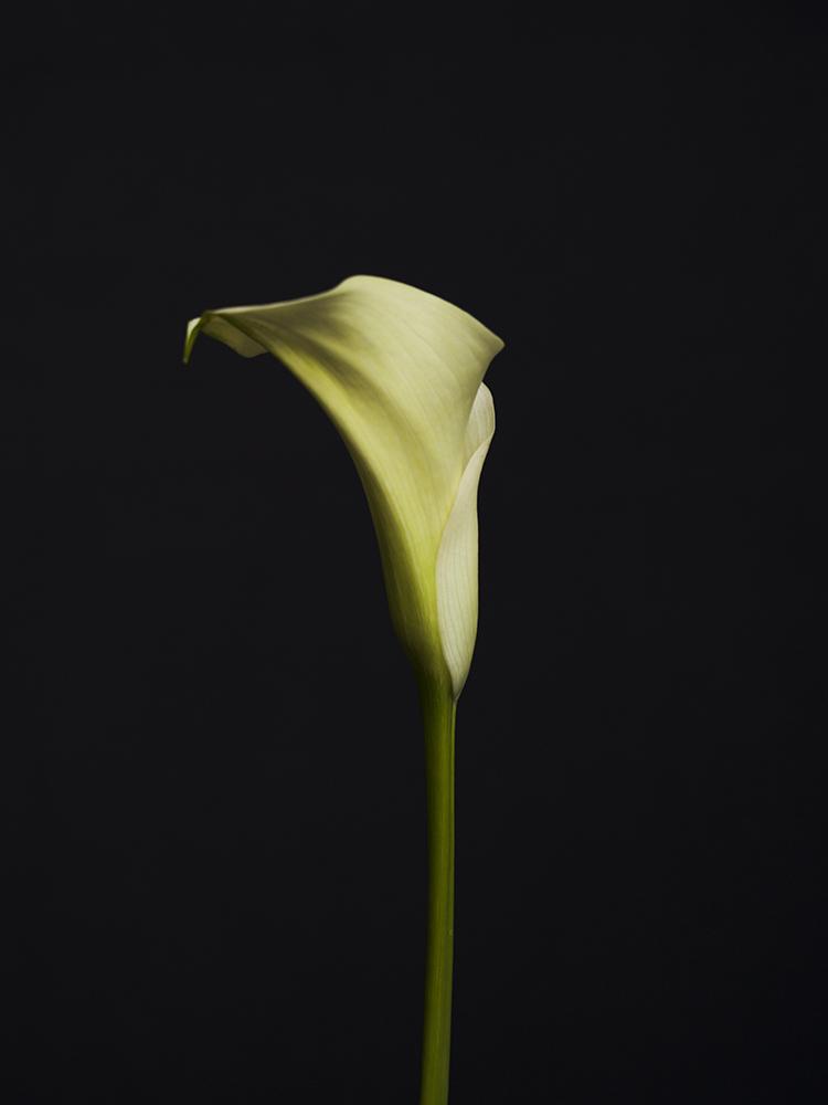 2017_ 07_Flowers_1 copy.jpg