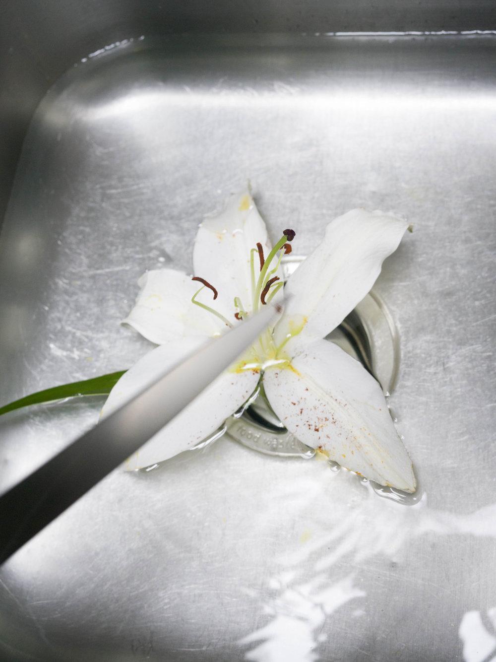2017_ 07_Flowers_1.jpg