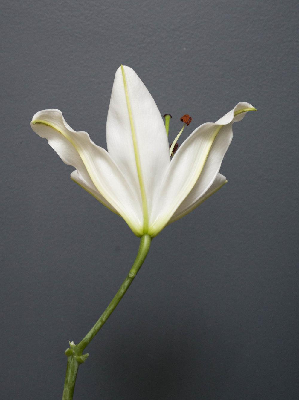 2017_ 07_Flowers_8.jpg
