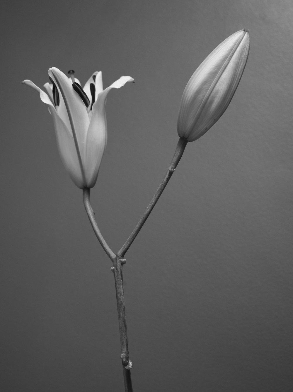2017_ 07_Flowers_2-3.jpg