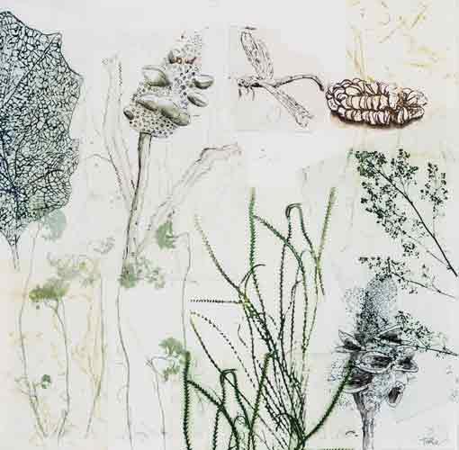 Banksias, Dragon & Blue Skeleton Leaf.jpg