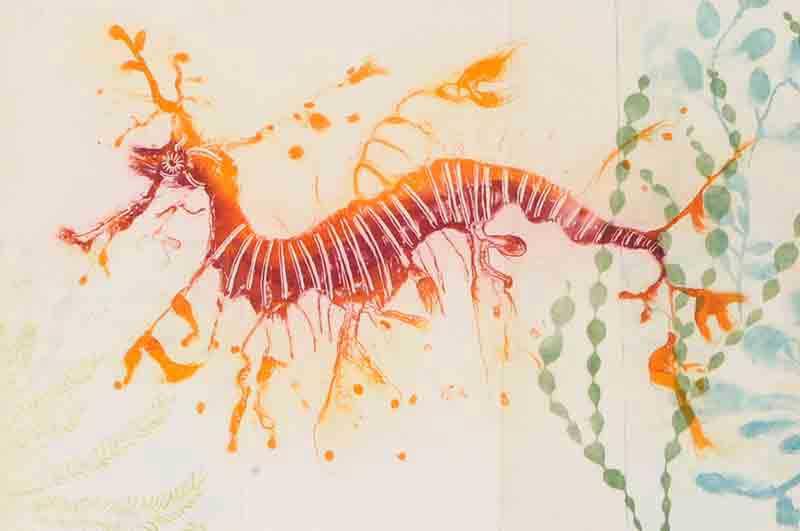 Weedy Sea Dragon