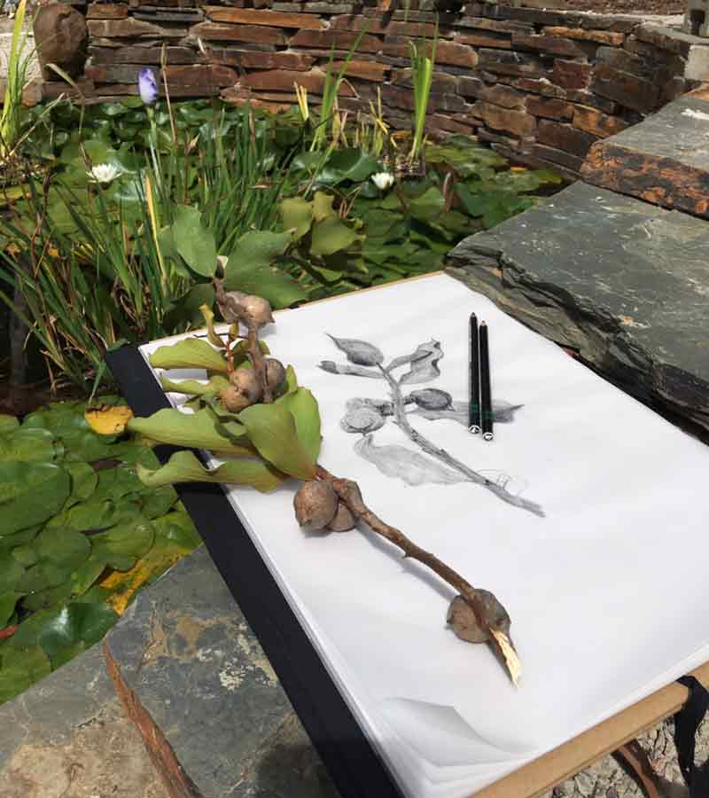 Drawing in the garden at Lorne