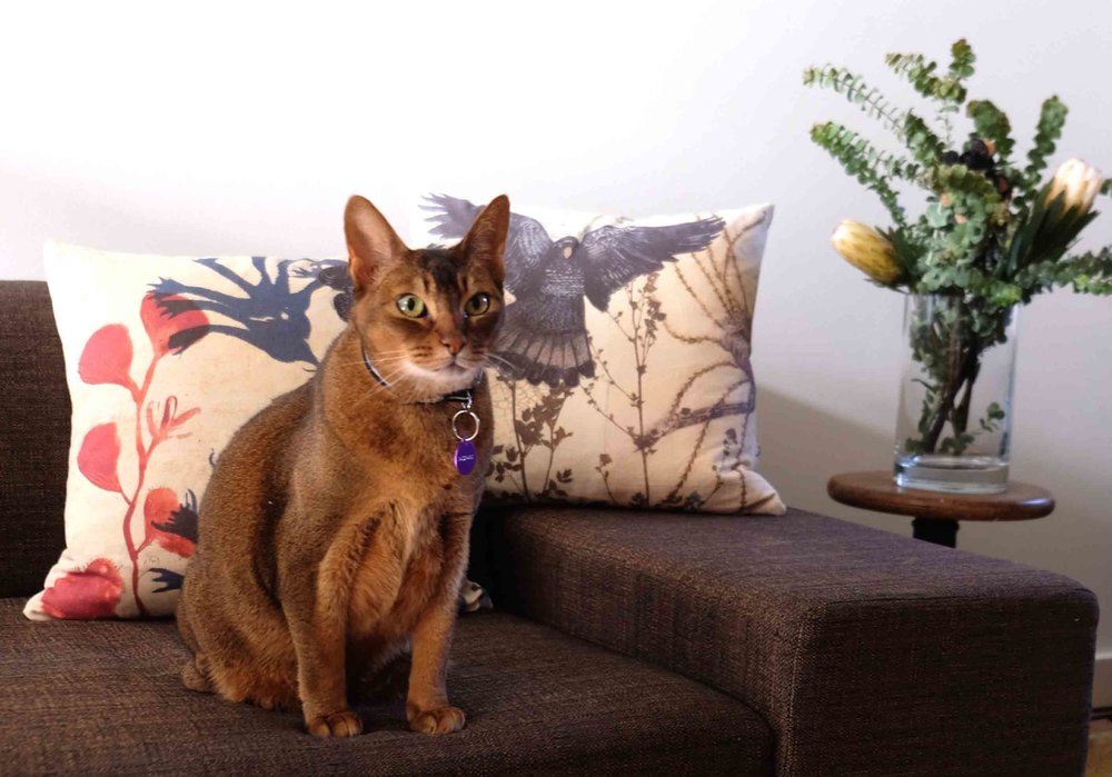 The very photogenic Scout on our homewares shoot