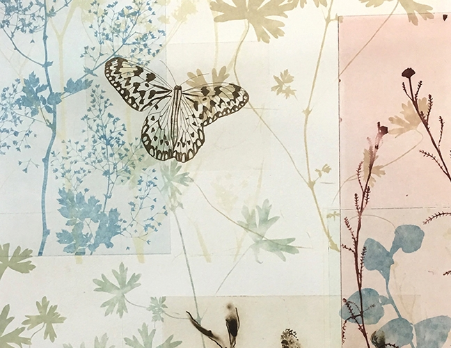 Butterfly Home page 2017.jpg
