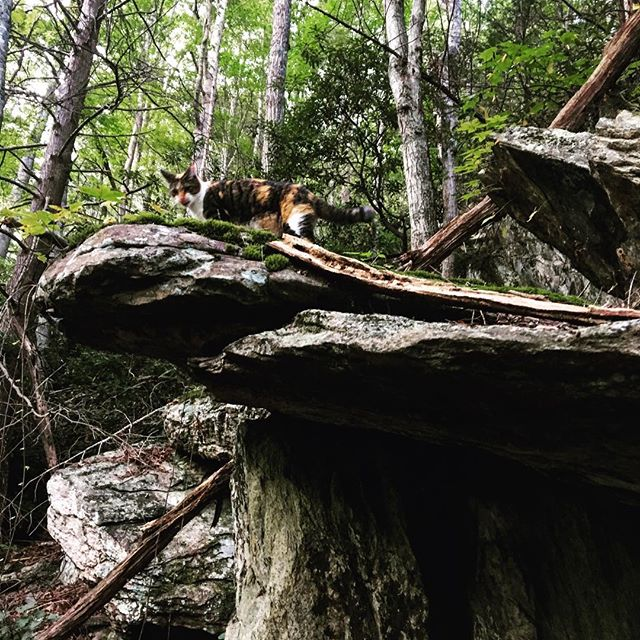 Emelda the rock climber. #catsofinstagram #wnc #hiking #friends #family #gratitude #forest #fun #adventure #explore