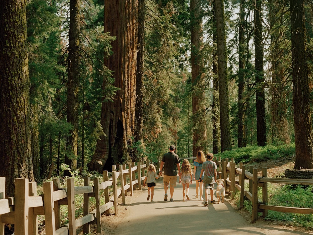 """California,"" Kings Canyon National Park"