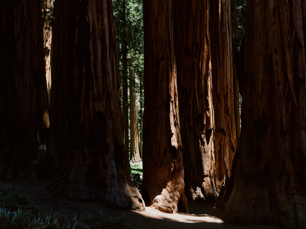 """The Senate,"" Sequoia National Park"