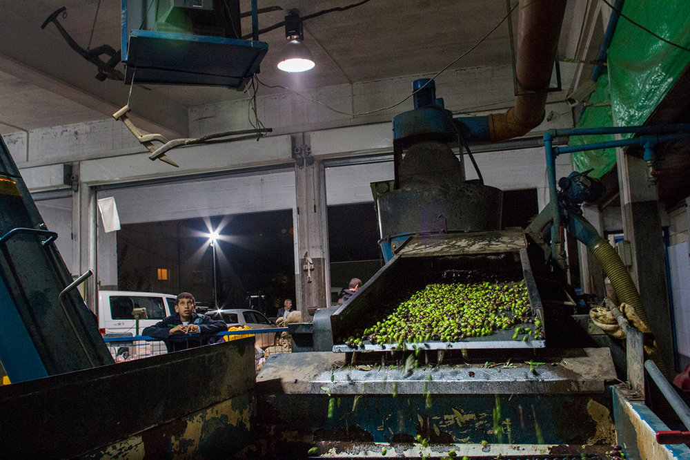 Olive Oil Season - Nazareth, Israel/Palestine