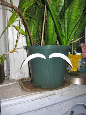 planter_eyebrows.jpg