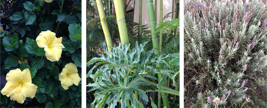 lavender, bamboo