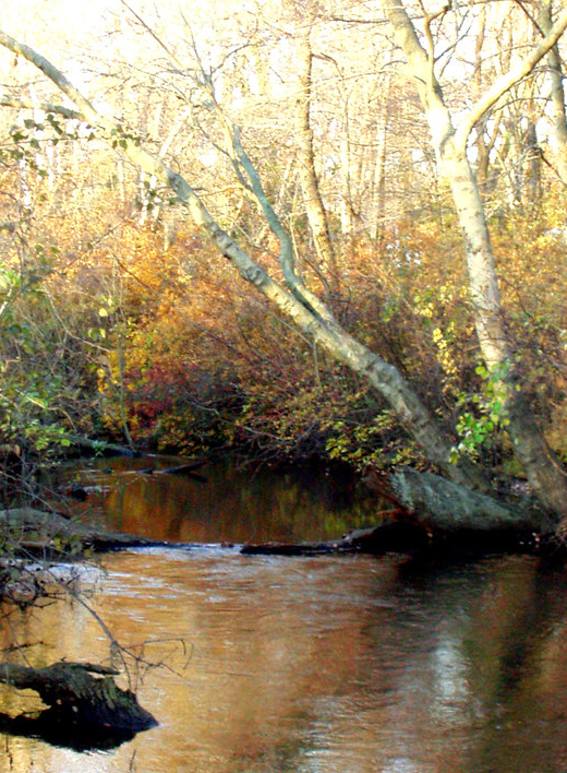 print by Joseph DeAiro Designs - Autumn Stream