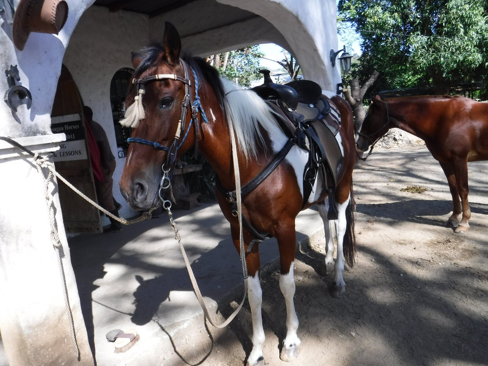 I spent the first few days horseback riding, through small towns and countryside in Guanacaste, on a native Criollo paint horse.  This is the lovely Leyenda!