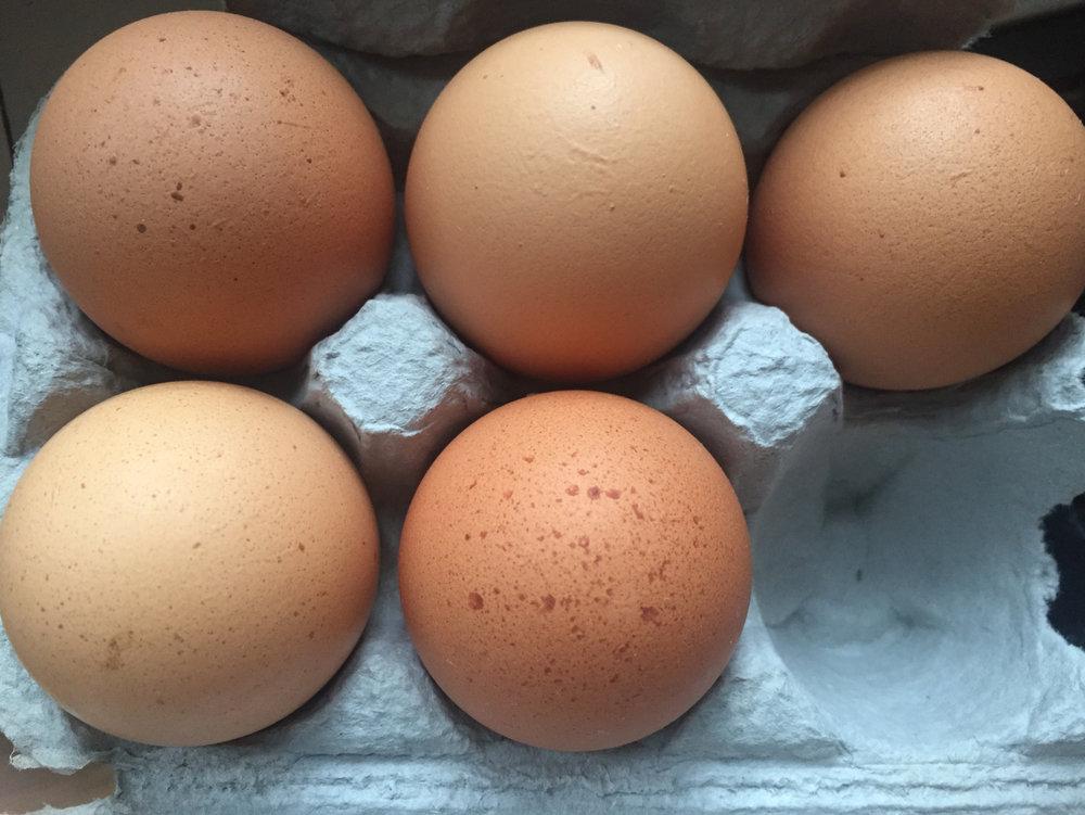 1:2 doz eggs_4496.jpg