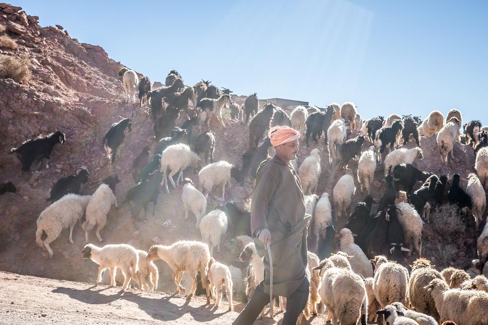 A Berber Shepherd