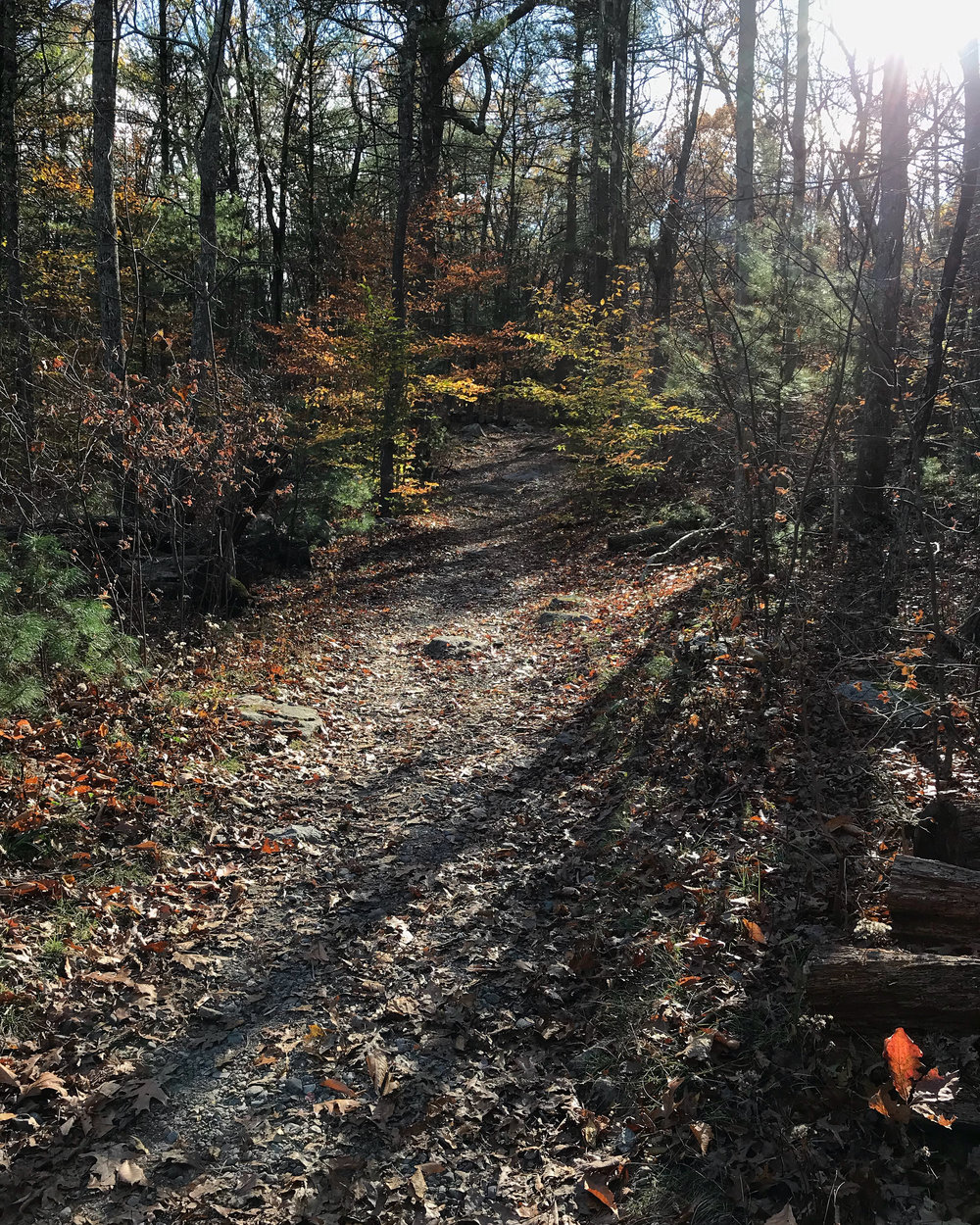 Noanet Woodlands (Dover, Massachusetts)