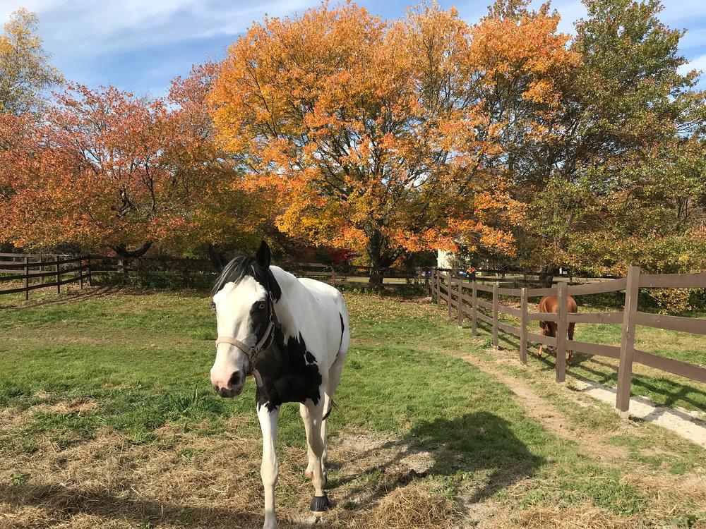 Rising Star Equestrian Center (Medway, Massachusetts)