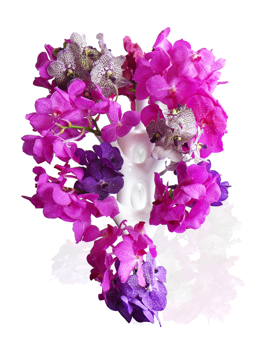 CORAL-13-Floral.jpg