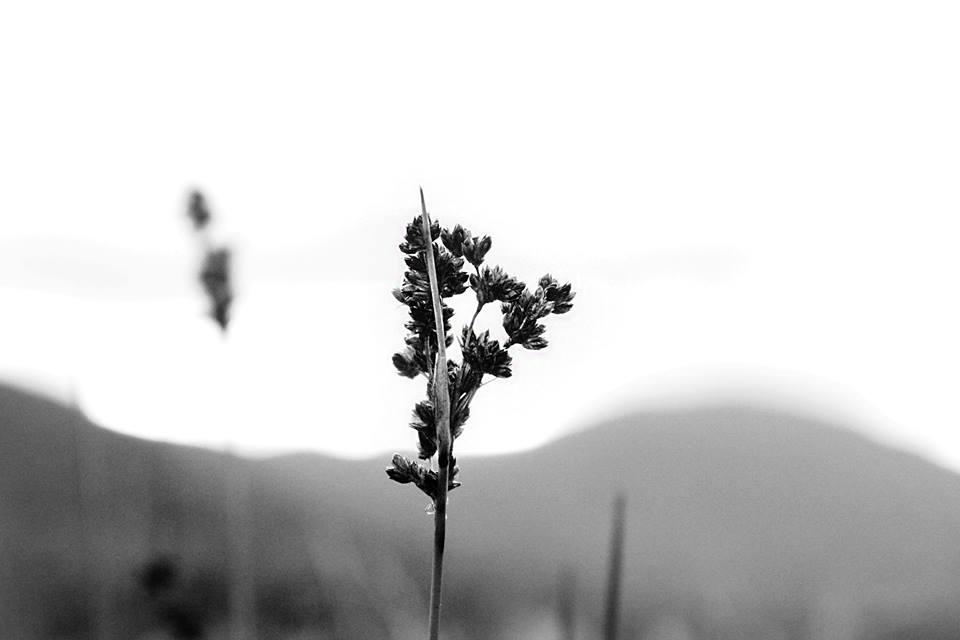 Flora. Wilsons Promontory.Shot on Canon 60D.