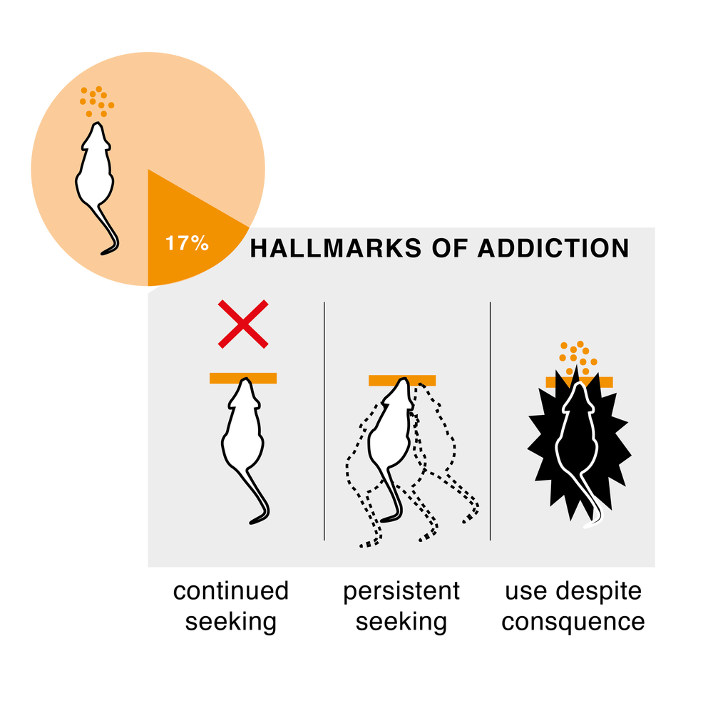 addicted+rats2-01.png
