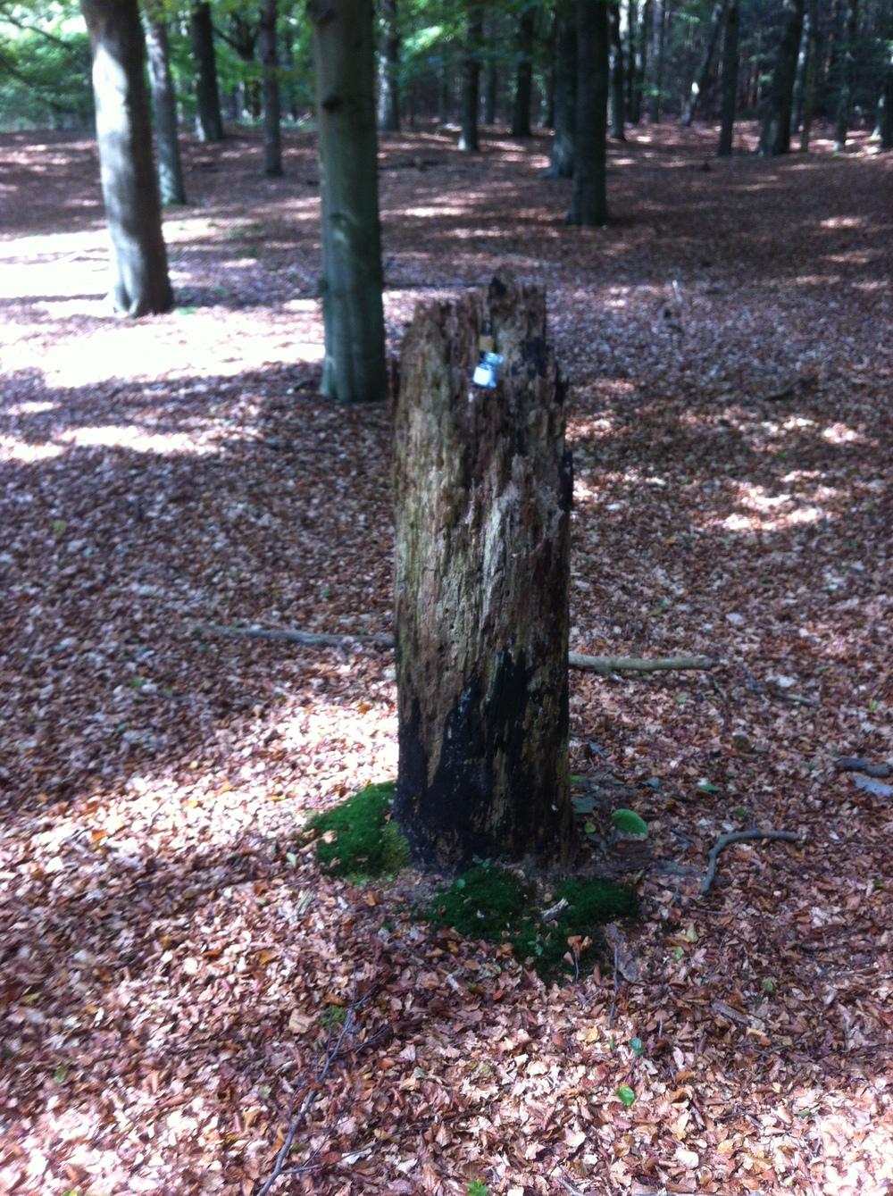 Avontuurlijk ingesteld? De bossen bieden een mooi speelveld voor spannende maar leerzame spelen.