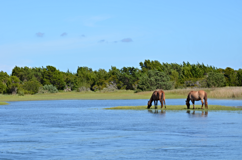 Wild horses of the Reserve