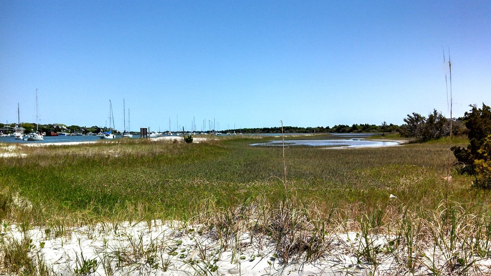 Tranquil marshes within the Rachel Carson Reserve