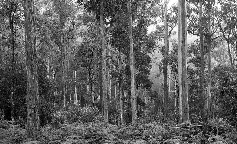 tasmania013.jpg