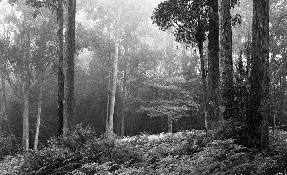 tasmania015.jpg