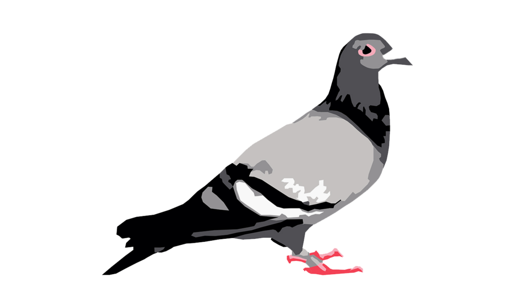staple pigeon.png