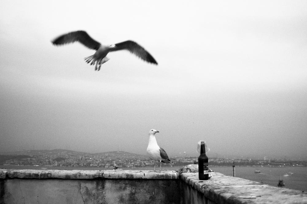 seagull beer - j. motal-1.jpg
