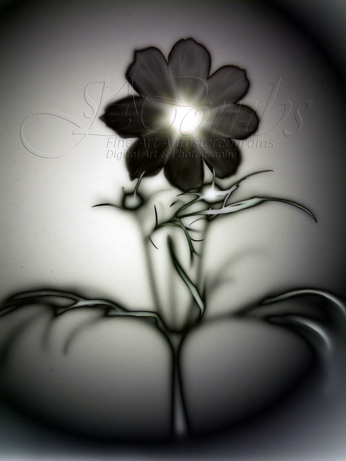 Silver and Black Night Flower
