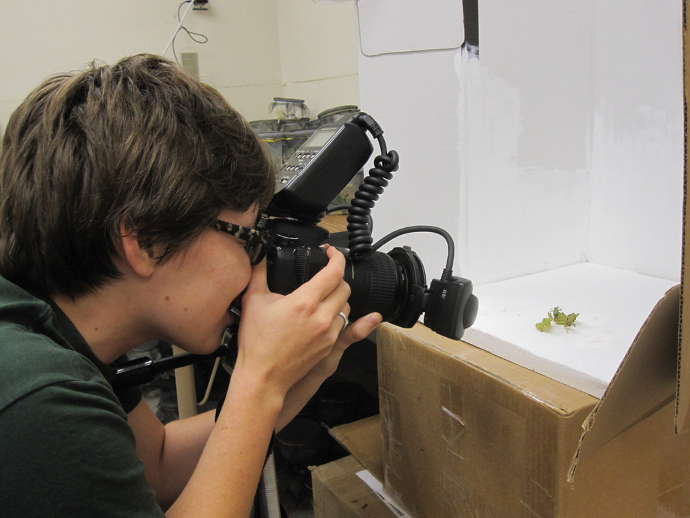 Janel diBiccari building her catalog of insect ID photos.