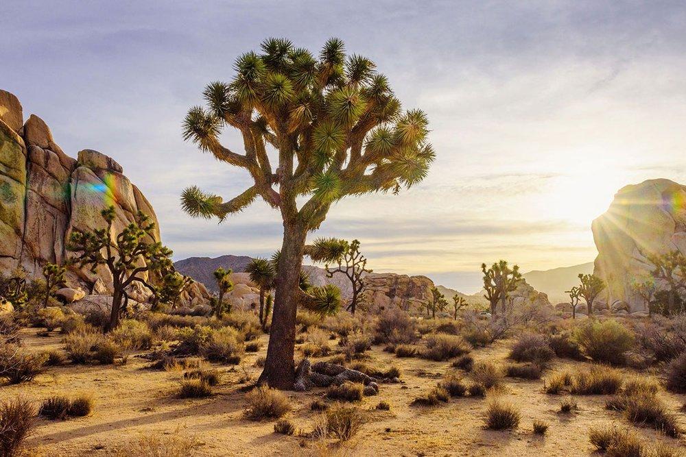 High desert - All Rentals