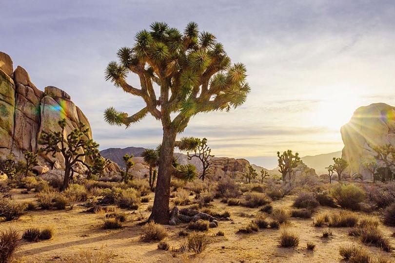 high Desert - All Properties
