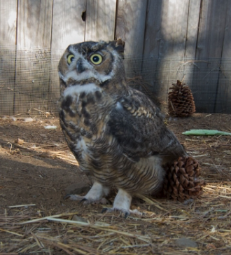 Lake Tahoe Wildlife Care to Expand / Tahoe Quarterly / November, 2014
