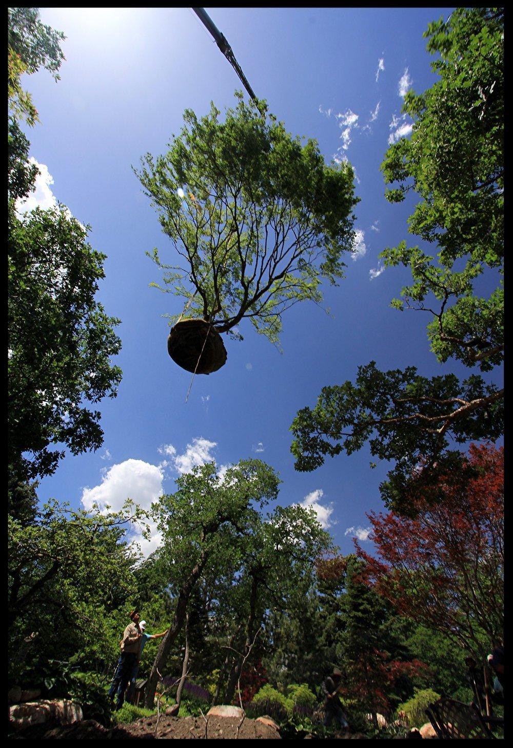 Pendleton Design Managment Gallery_21_tree_crane.JPG