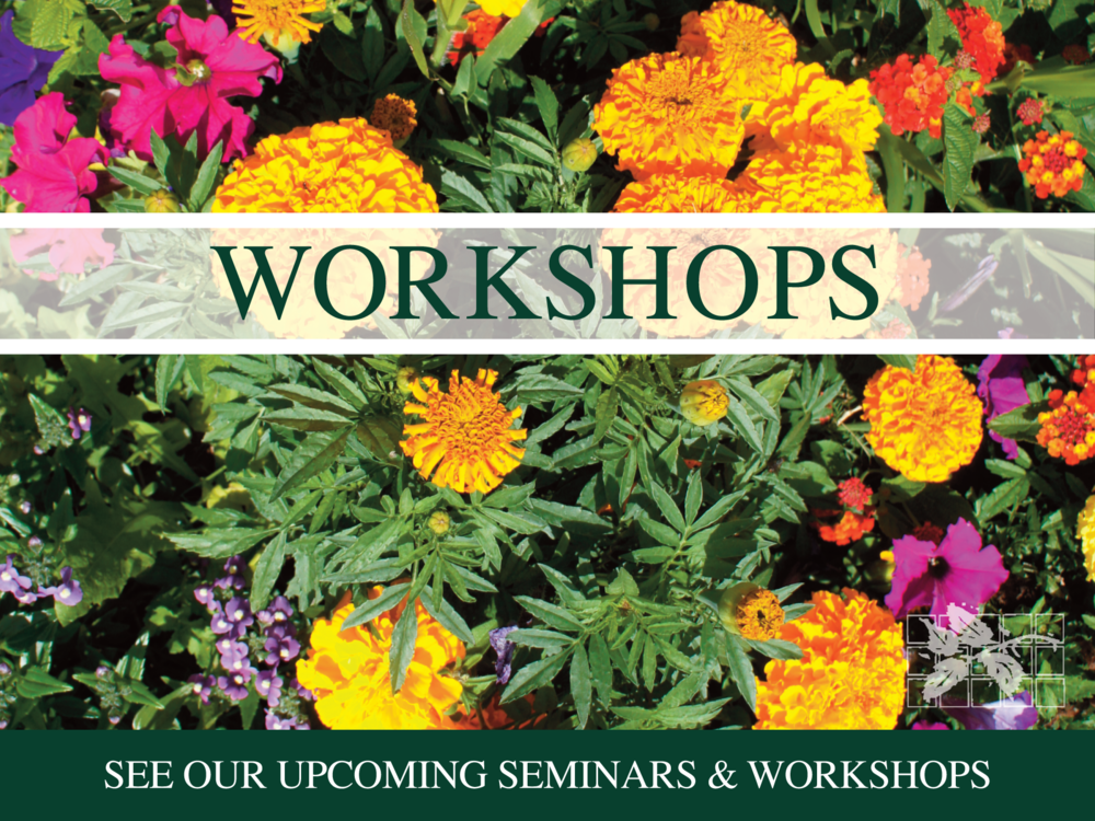 Upcoming workshops...
