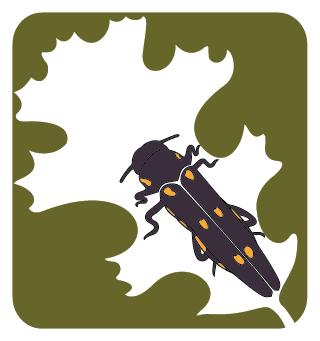 GSOB_Logo.png