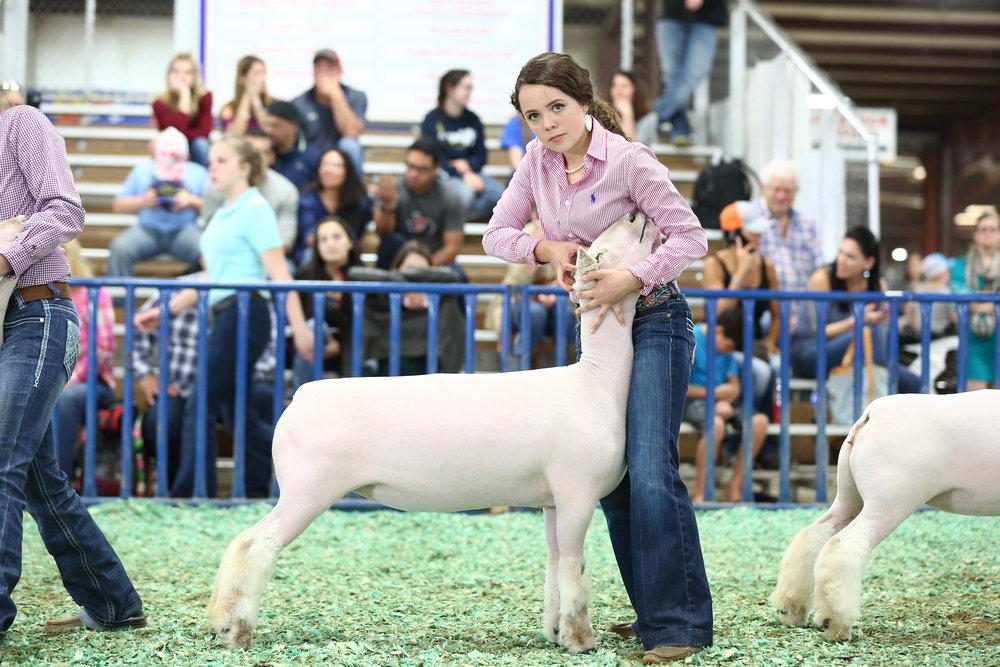 Mathis SD ewe lamb.jpg