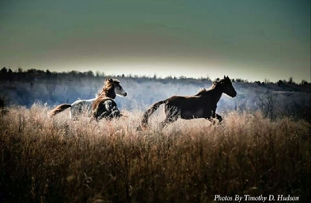 Wild Horses of Breathitt County,  @PHOTOSBYTDH