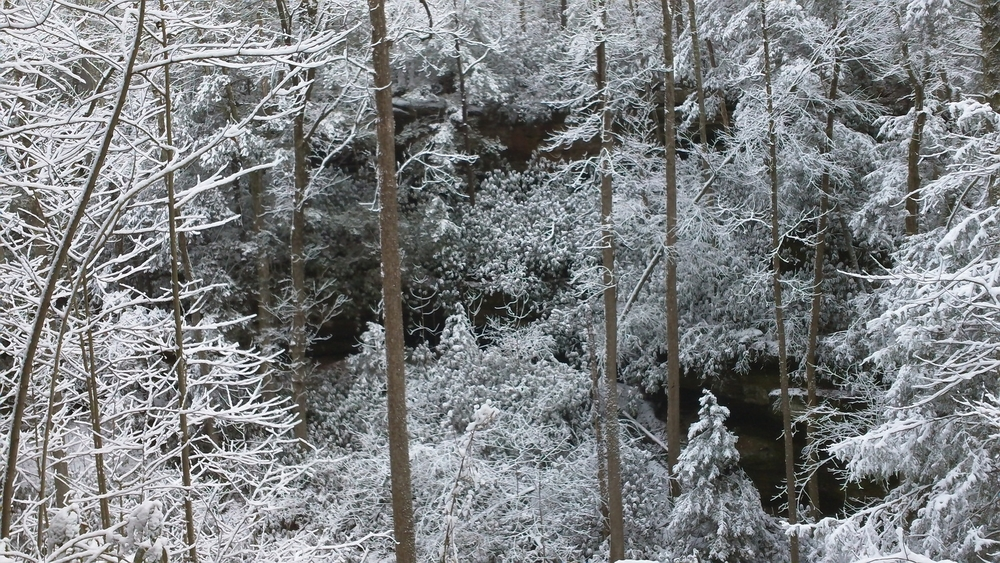 Evergreens look particularly beautiful when covered in snow.  Photo by Nate Spicer